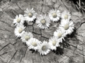 Daisy 3_edited.jpg