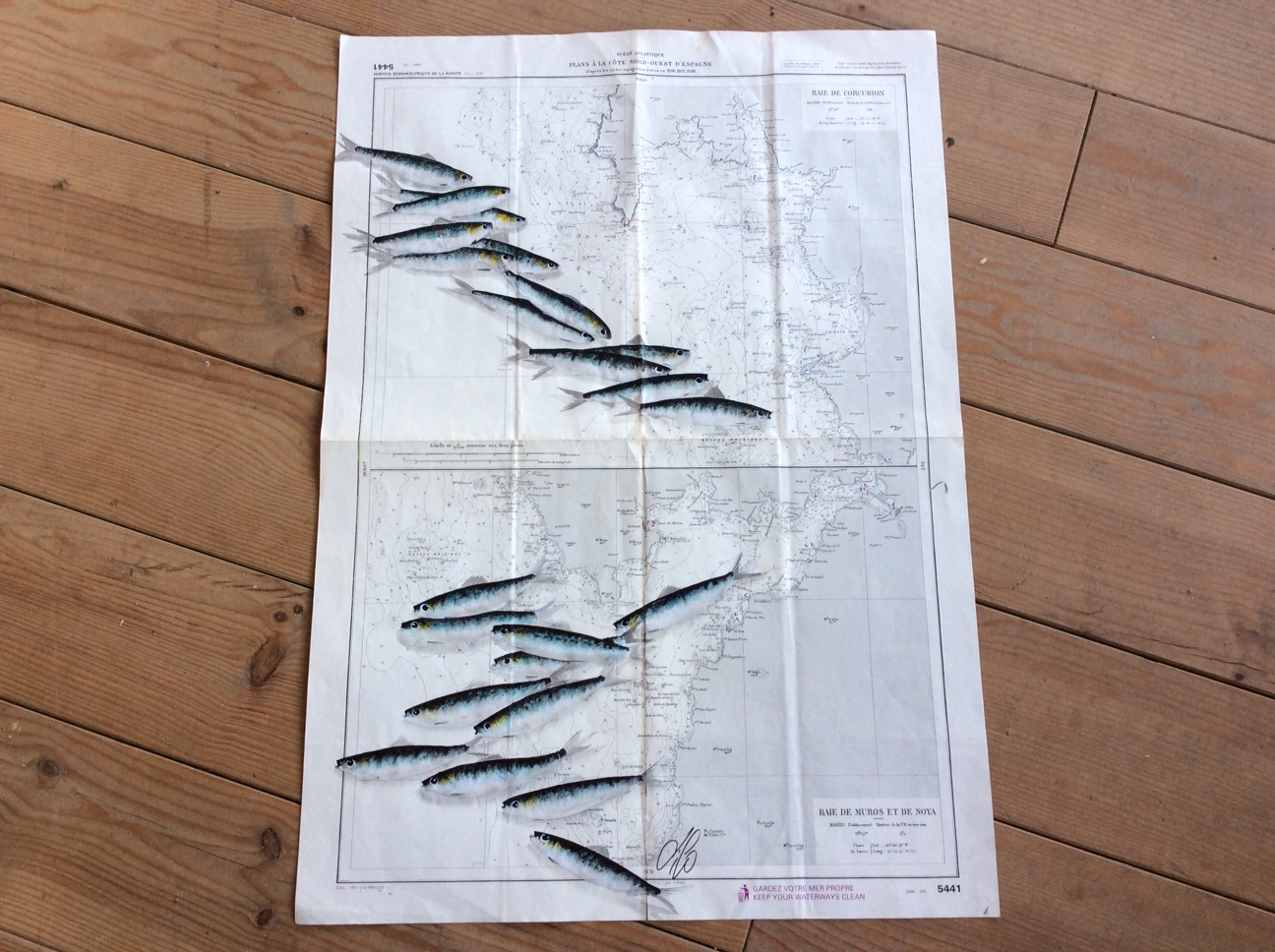 Carte sardine baie de Muros