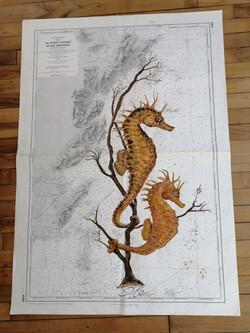 hippocampes et gorgone