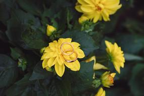 012-fedi-anelli-margherite-fiori-dettagl