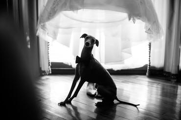 08-cane-vestito-sposa-finestra.jpg