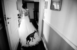 28-vestito-sposa-cane.jpg