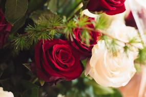 003-rose-rosse-bianche-albero.jpg