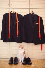 01-matrimonio-gay-gatto-scarpe-preparati