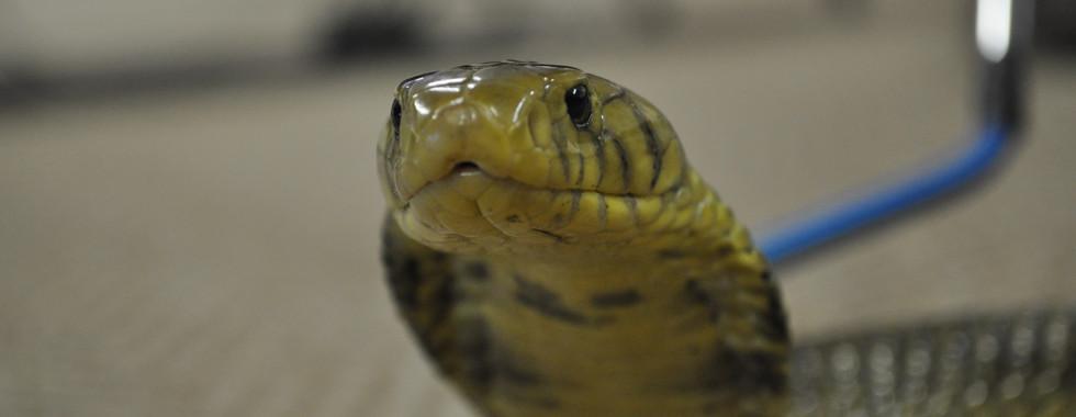 Snake Orientation