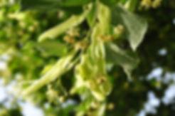 aromathérapie avignon