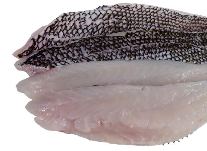 Fish_BlackSeaBassOverhead_zpsa52addee_1024x1024