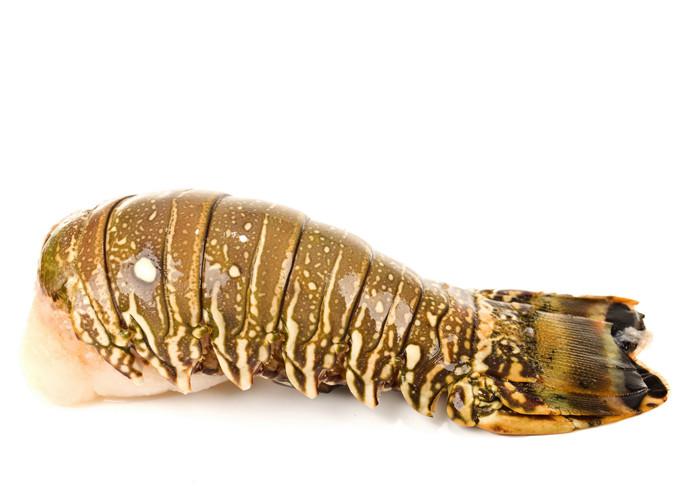 LobsterTail_zps988b187a