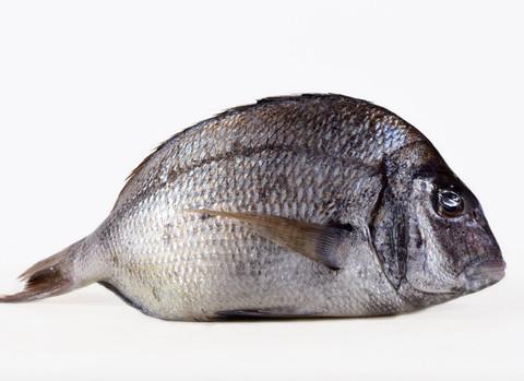 Fish_Dorade_zps2db89f77_large
