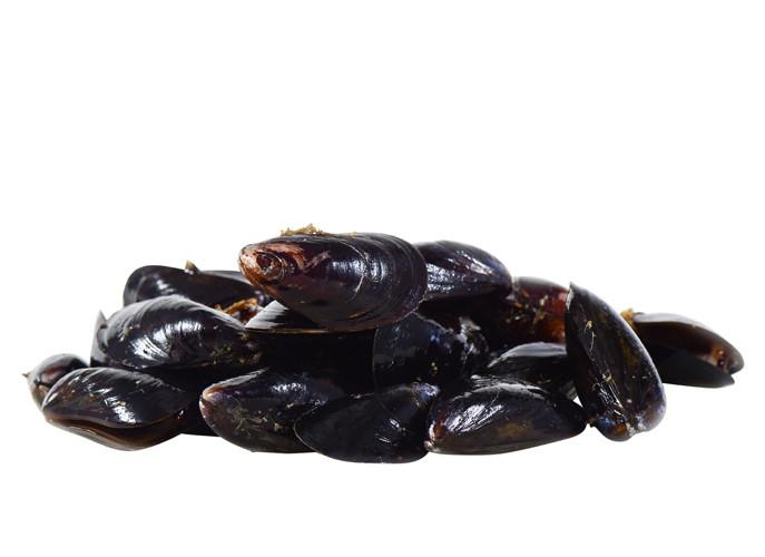 Shellfish_Mussels