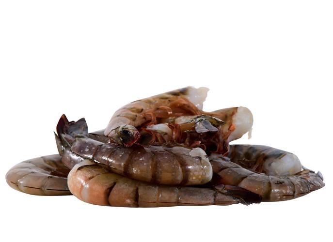 Shrimp_U10WhiteShrimp_zpsb4bd0129