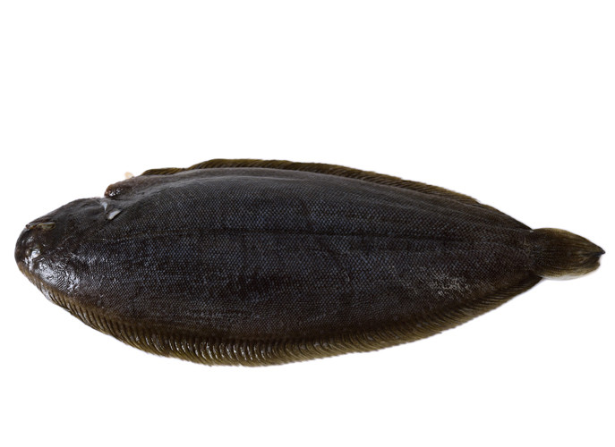 Fish_DoverSole_zpsbed349a4