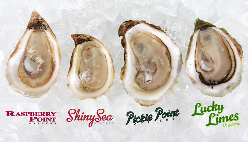 oysters-huitres-IPE.PEI