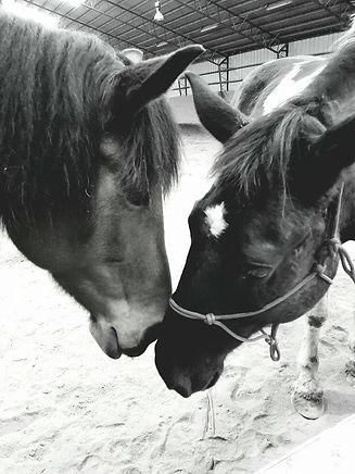 horses touching.jpg