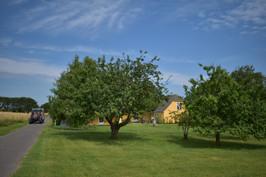 Ankomst til Blåkærgård fra vejen. Med æblelunden i forgrunden.