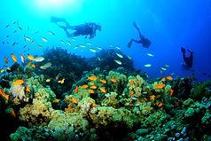 reef random.jpg