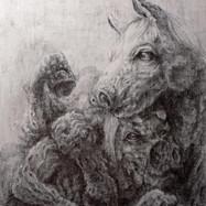 Equine Amalgamation