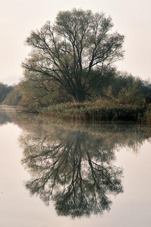 Norfolk reflections