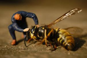Wasp Macro shot