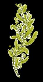 seaweed_edited.png