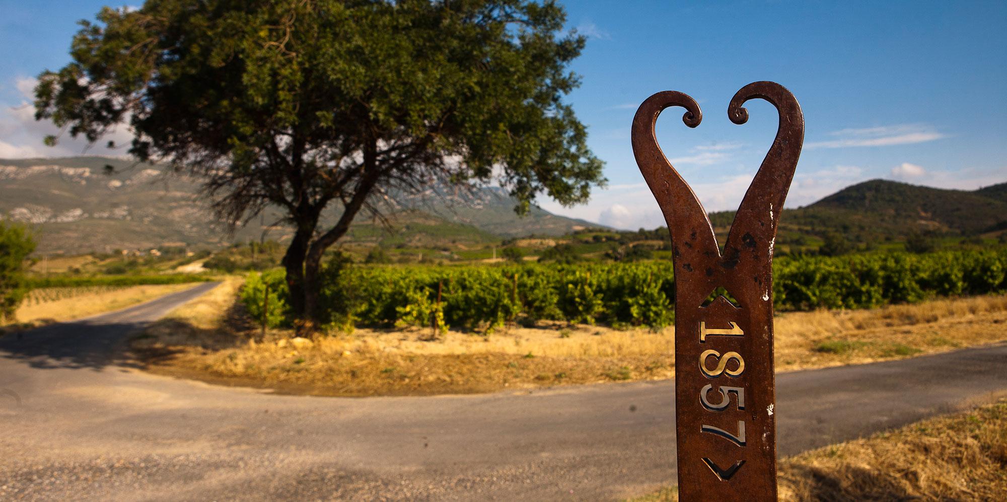 Vignes des Corbières Tuchan