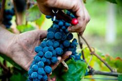 Tuchan vin Fitou corbières