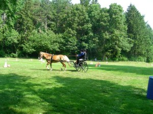 Carriage-driving-013-1-300x225