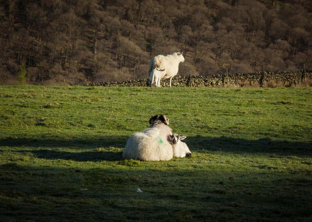 Lake District Spring