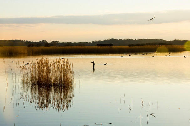 Minsmere reflections
