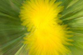 Dandelion splash