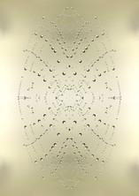 Cobweb beauty