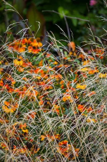 Almost abstract grasses