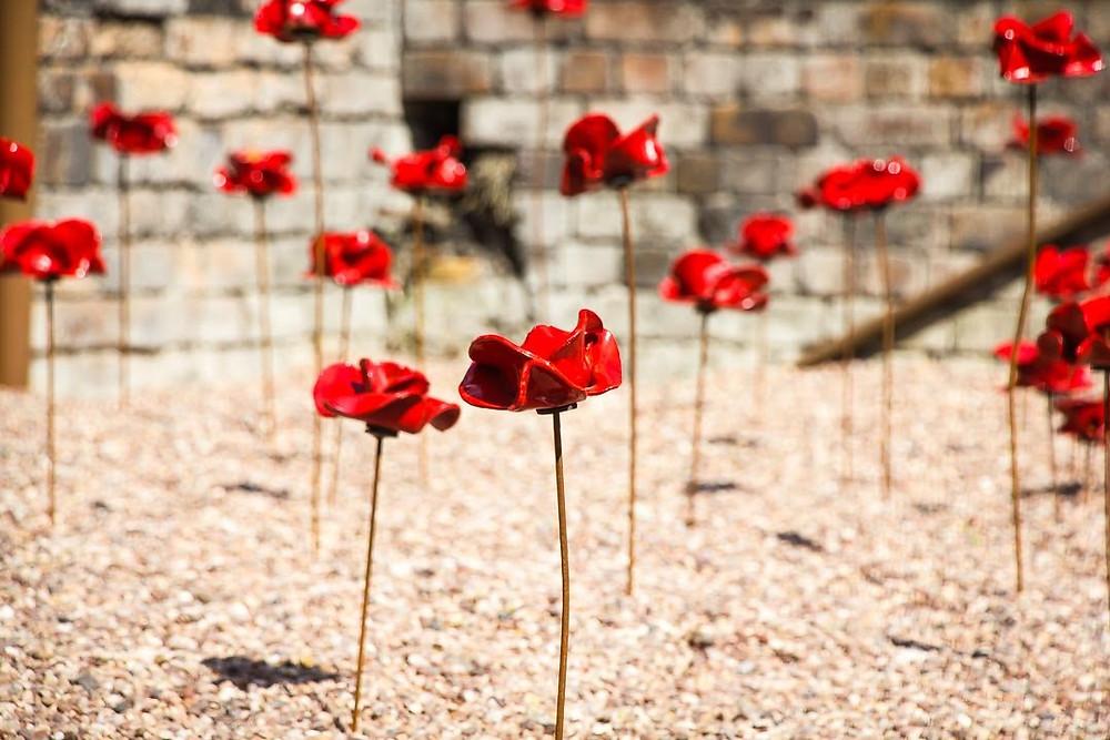 poppies, Weeping Window, WW1, sculpture