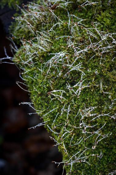 Dew on lichen