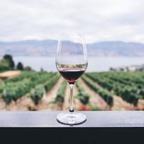 Enjoying the local Vineyard & Winery