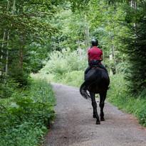 Horseback Riding through the Forest