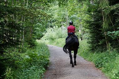 horseback riding in forest.jpg