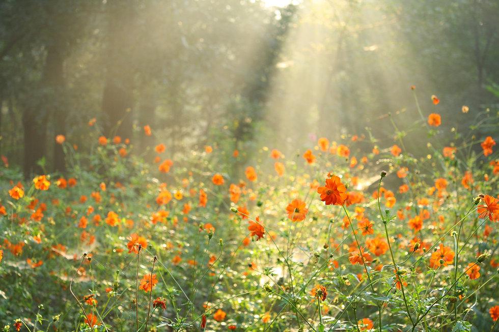flower field under the morning sunlight.jpg