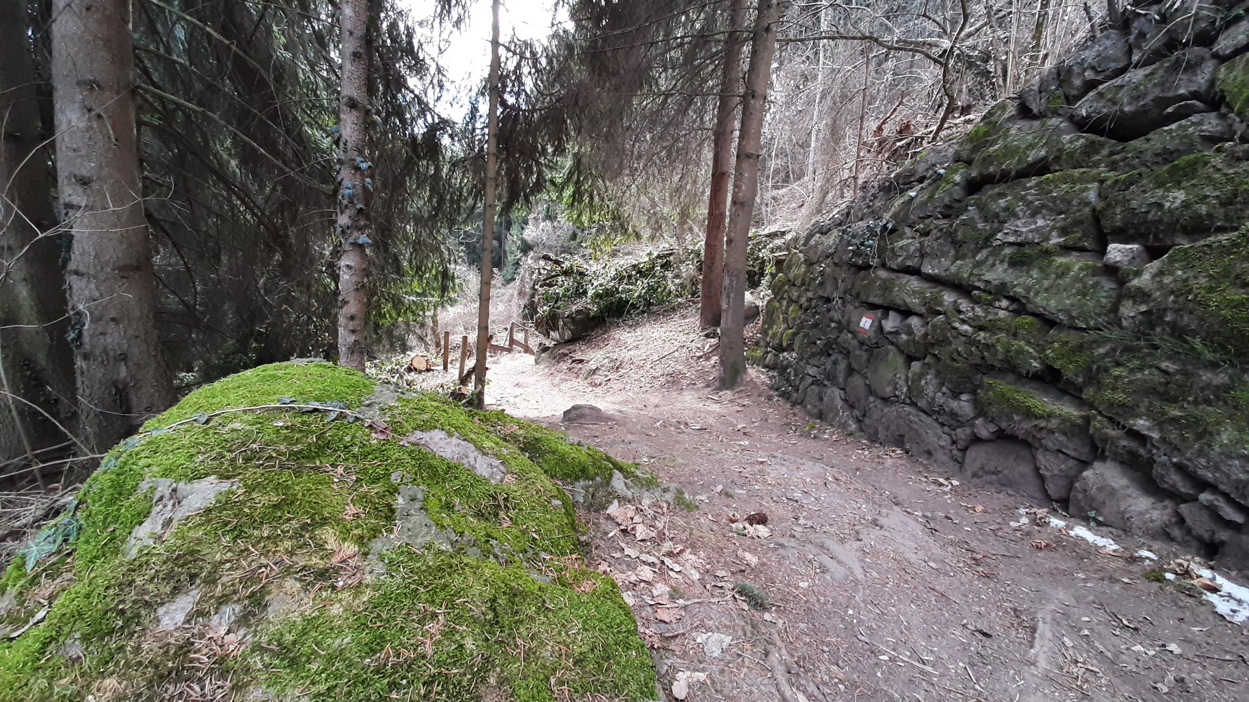Meltina, passeggiata nel bosco
