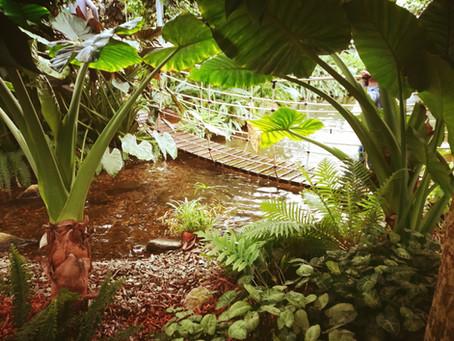 ORCHIDEENWELT IN GARGAZON