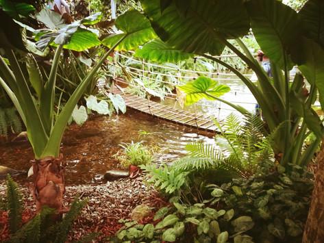 GARGAZZONE: ORCHIDEENWELT IL PARADISO TROPICALE