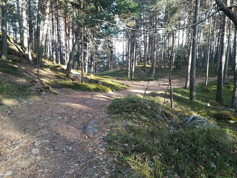 Il bosco di Costalovara