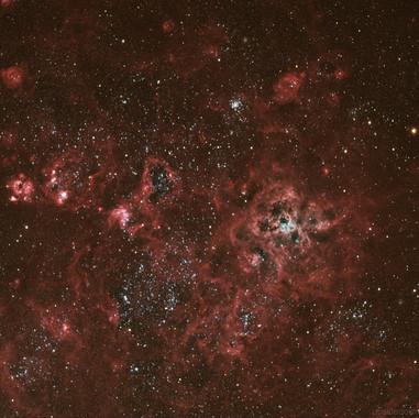 Tarantua Nebula
