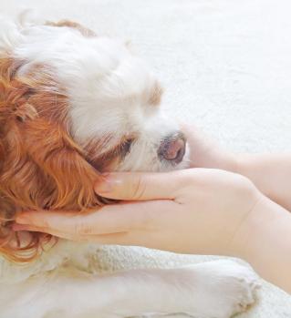 pet animal reiki energy healing petcare.