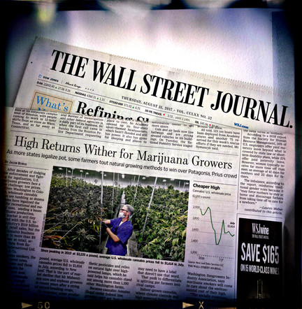 WSJ: High Returns Wither for Marijuana Growers