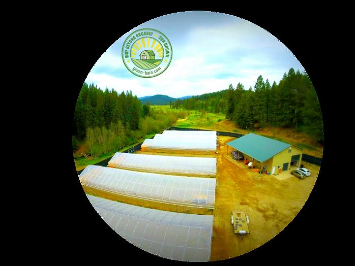 organic sun grown marijuana cannabis weed farmers