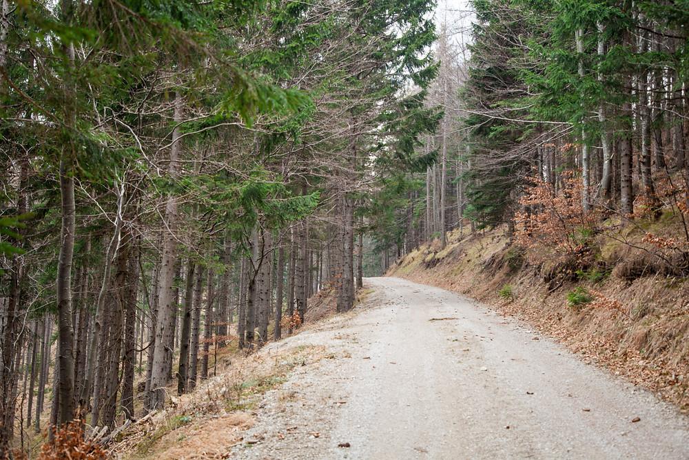 Fichtenwald, Forstweg, Hohenstein, Pielachtal, Mostviertel, Niederösterreich, Wandern, Wanderung, Bergwandern