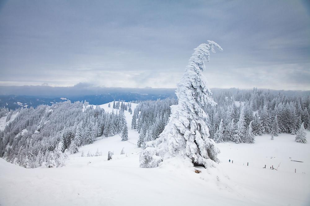 Winterwandern, Winterwanderung, Schnee, Bergtour, Bergwandern, Tirolerkogel, Niederösterreich, Österreich, Annabergerhaus, Wanderurlaub, Wanderreise, Kurzurlaub, Winter