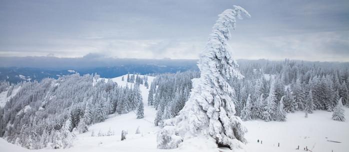 Winterwandern - drei schneereiche Touren in den Alpen in Niederösterreich