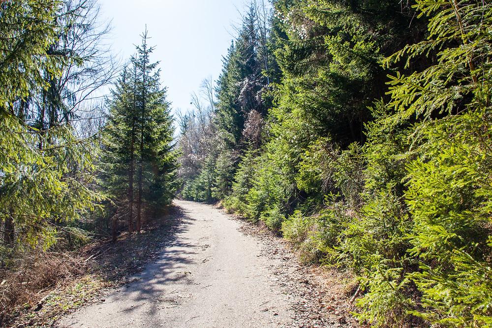 Frühling, Lehenrotte, Lilienfeld, Voralpen, Niederösterreich, Wandern, Wanderung, einfache Wanderung, Nadelbäume, Wanderweg